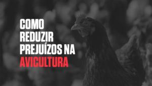 Como_reduzir_prejuízos_na_avicultura