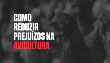 Como reduzir os prejuízos na avicultura